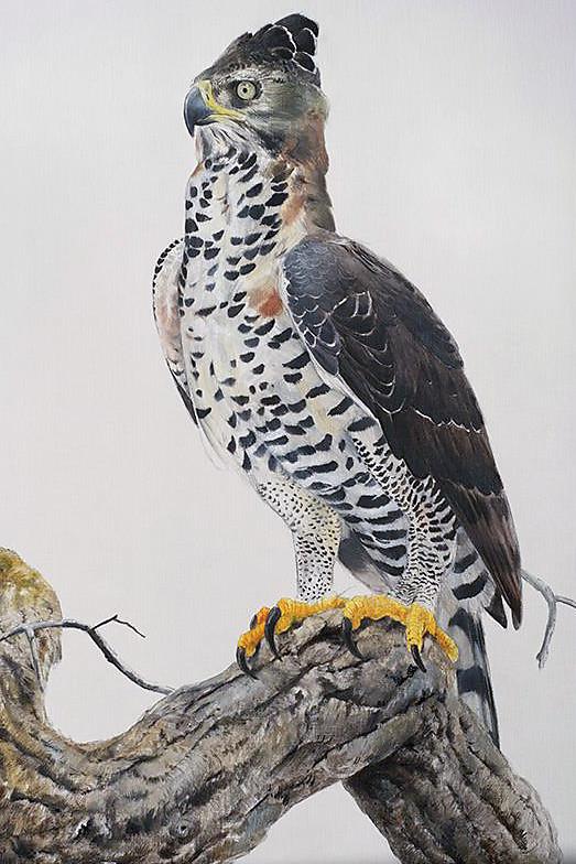 aves40.jpg