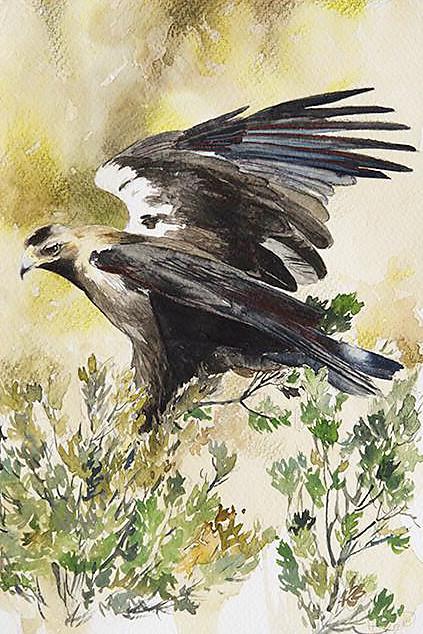aves38.jpg