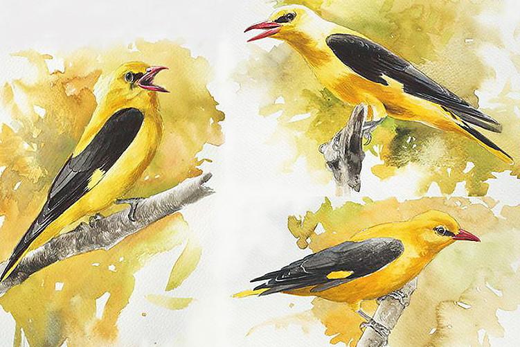 aves35.jpg