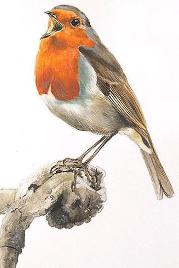 aves31.jpg