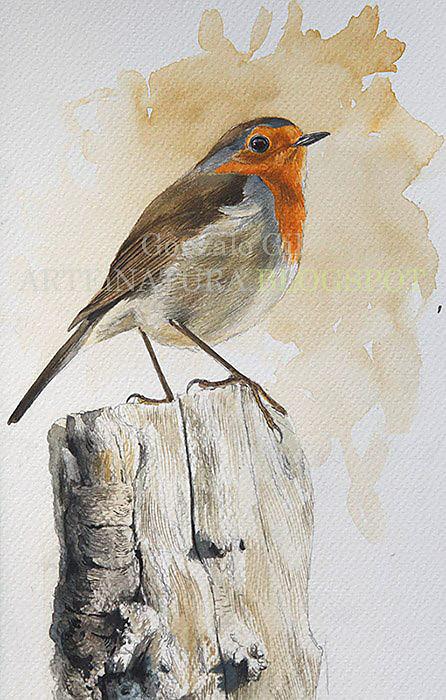 aves26.jpg