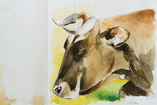 vacas44.jpg