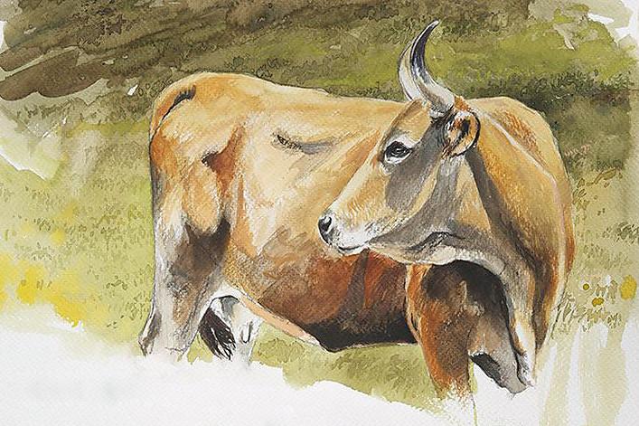 vacas43.jpg