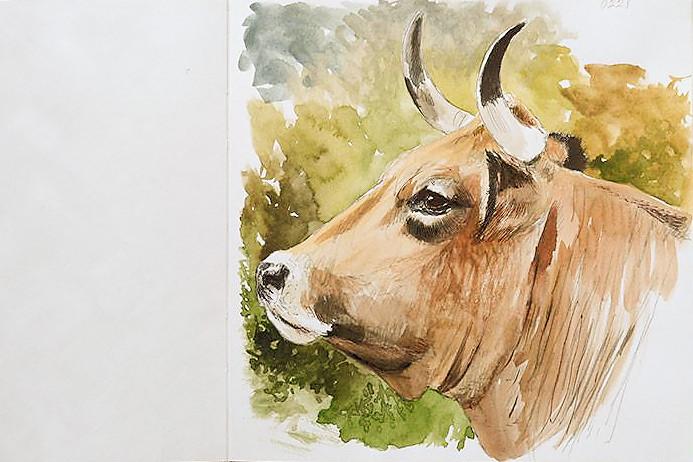 vacas41.jpg
